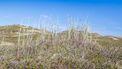 Op deze foto zie je Nationaal Park en duinenpark Texel.