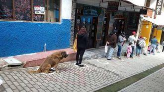 Op deze foto zie je een hondje op anderhalve meter in de rij zitten op de plek van zijn baasje.