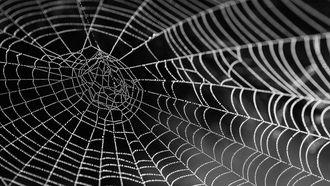 spinnenwebben - spinnenweb - australië - natuur