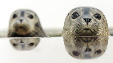 Een foto van twee zeehonden