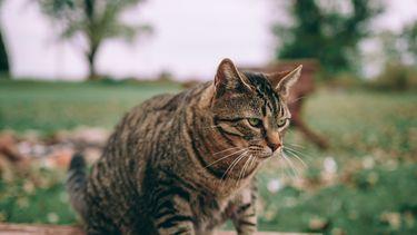 Hilarisch: Katten spelen beroemde scène uit The Lion King na