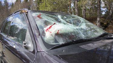Bestuurder (19) geen rijbewijs, twee 17-jarigen dood