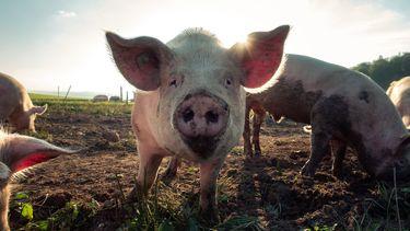 Dierenwet Partij voor de Dieren dierenleed