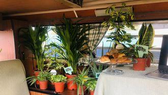 Carrière plant planten
