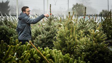 Het wemelt van de beestjes in je kerstboom