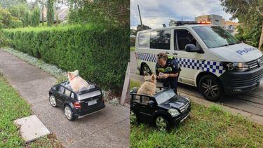Politie houdt 'joy-ridende' hond staande