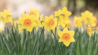De lente wordt ingeluid met kou dit weekend