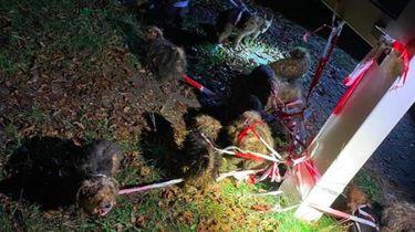 16 zwaar verwaarloosde honden aangetroffen langs de weg in Arnhem