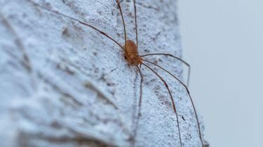 Spinnen zijn handig, laat ze gewoon zitten