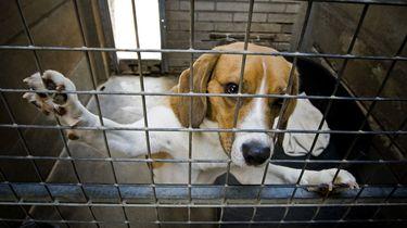 Celstraf geëist voor organiseren hondengevechten