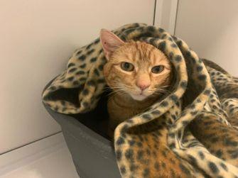 Kat met kanker zoekt huisje voor laatste dagen