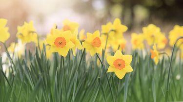 De lente wordt ingeluid met zon dit weekend