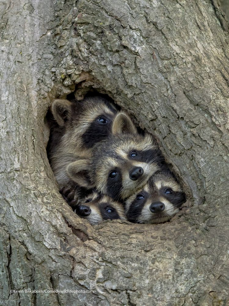 Quarantine life - The Comedy Wildlife Photography Awards 2021 / Kevin Biskaborn