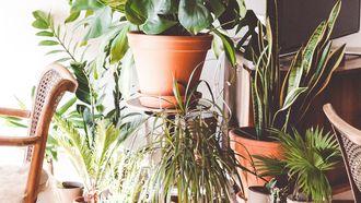 Verzorgen van planten hét alternatief voor het krijgen van kinderen?