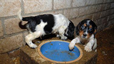 Hondenmarktplaats gaat strijd aan met puppyfabrieken