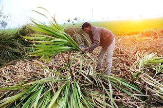 India start campagne om inwoners meer suiker te laten eten