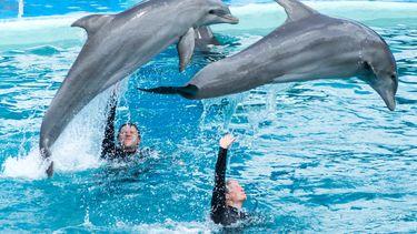 dolfijnen dolfijnenshows dolfinarium