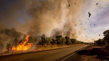 Kwart miljoen Australiërs moet vluchten voor alsmaar grotere vuurzee