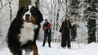 Sneeuw en ijs leuk voor zowel mens als dier - ANP
