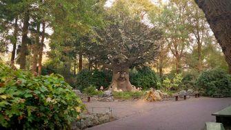Een foto van het Sprookjesbos in de Efteling