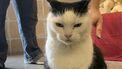 Dierenasiel zoekt dringend baasje voor 'stoutste kat ter wereld'
