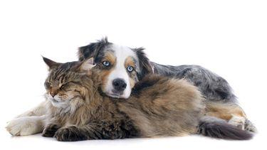hond en kat