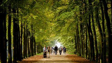 Op deze foto zijn mensen te zien die door een bos lopen. Het is nog erg groen, maar er liggen ook bladeren op de grond.