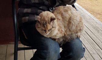 Doodgewaande kat overleeft Australische bosbranden