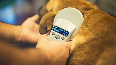 Op deze foto zie je een hond die geimplementeerd word met een Op deze foto zie je een sub dermal microchip