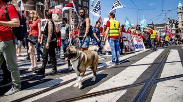 Honderden bij Animal Rights Mars Amsterdam