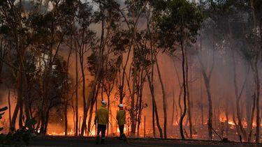 Australische brandweerman omgekomen bij bosbranden