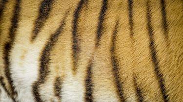 Helpt Trump de Tiger King vrijlaten?