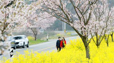 Minder dan 10 dagelijkse besmettingen Zuid-Korea