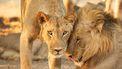 foto van leeuwen