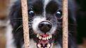 foto van hond met hondsdolheid