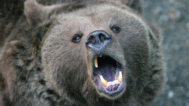 foto van een beer