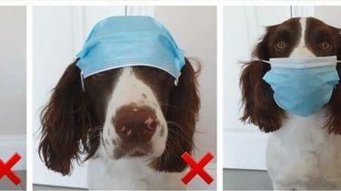 Op deze foto draagt hond Oakley een mondkapje
