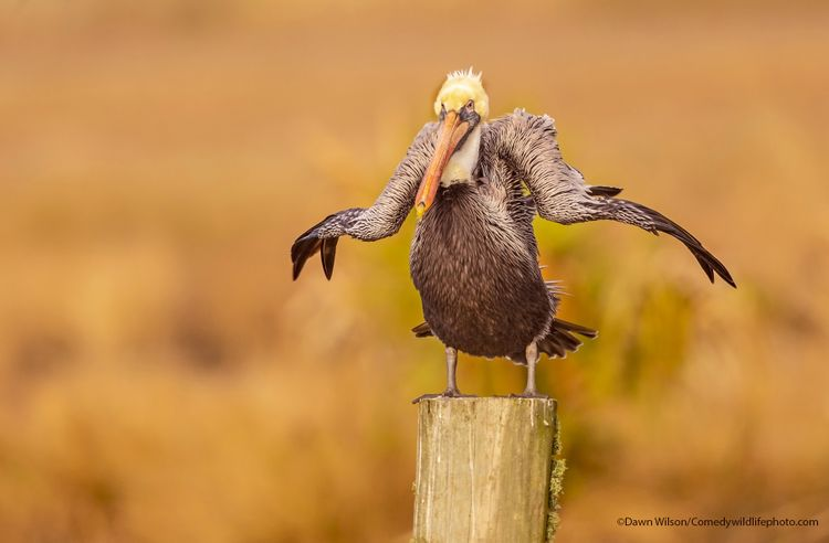 Shaking off - The Comedy Wildlife Photography Awards 2021 / Dawn Wilson
