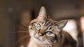 Versta jouw kat met een druk op de knop