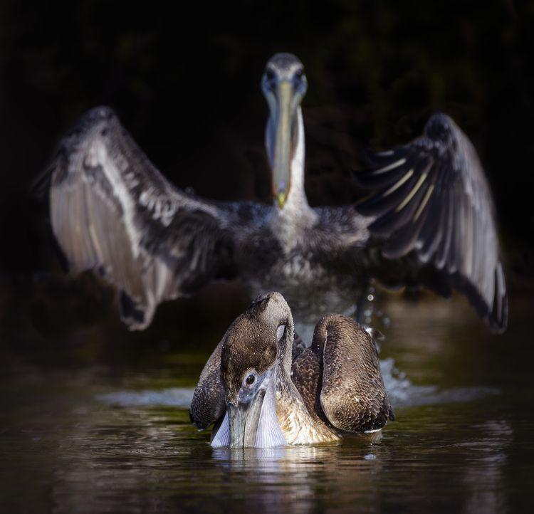 'Abracadabra' © Vicki Jauron / Comedy Wildlife Photo Awards 2020