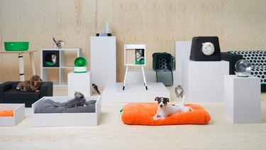 Ikea lanceert honden- en kattenlijn