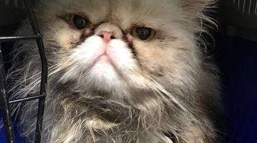 Verwaarloosde kat bij het grofvuil gedumpt