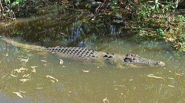 Krokodil verdacht van dood dementerende vrouw