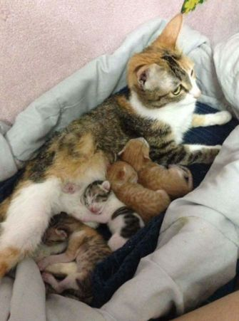 'Vaderkat' laat liefde zien en verovert het internet