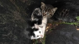 Kittens gedumpt in gft-bak