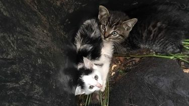 Kittens gedumpt in gft-bak