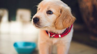 Dochter smeekt om puppy met fantastisch gevolg