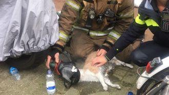 Kat krijgt zuurstof toegediend // Foto: Rijnmond veilig