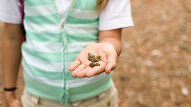 Scholiere maakt kikkervisjes-asiel en wordt TikTok-ster