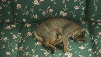 Dit is de echte reden dat huisdieren slapen: Je kat verveelt zich